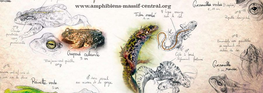 What do amphibians give us, and what do we lose without them?